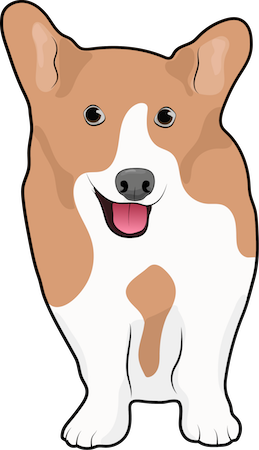 Front view drawing of a tan and white short legged dog with large prick ears, a pink tongue and black nose looking happy