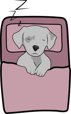 A little gray puppy sleeping inside of a pink sleeping bag