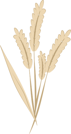 A drawing of a tan stalk of wheat