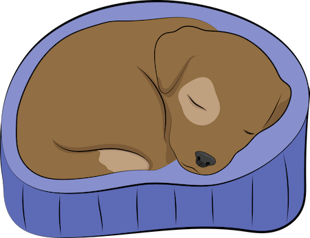 A drawing of a small brown puppy with a tan patch around one eye and at the tip of her tail curled up in a purple dog bed