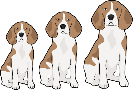 A drawing of three different size Beagle dogs sitting in a row