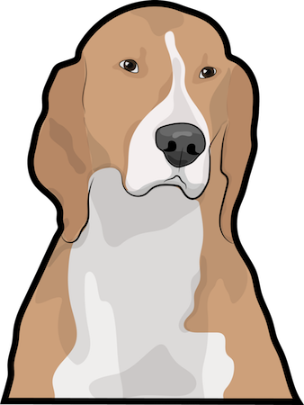 Head and neck shot of a brown hound dog with long soft ears and a big black nose with a white muzzle and chest