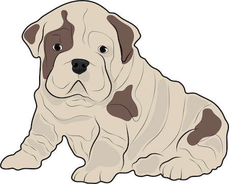 A tan with brown, droopy, pudgy, thick, wrinkly bulldog puppy sitting down