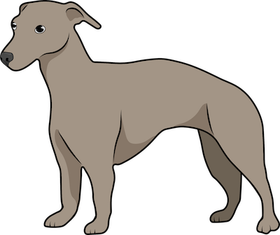 A drawing of a little brown dog with short stubby legs and rose ears standing