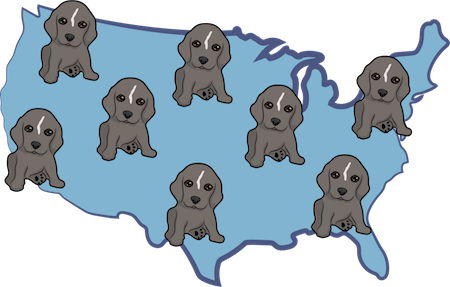 A map of the United States with little brown puppies all over it