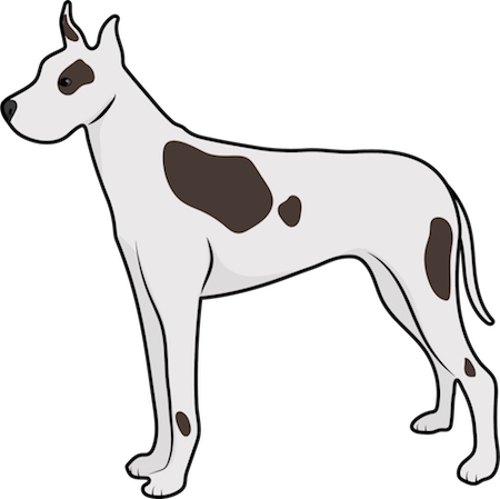 A white with brown Great Dane dog standing