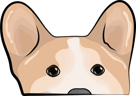 The head and ears of a tan and white welsh corgi dog