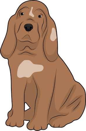 A droopy brown bloodhound dog with long ears that hang past her neck and a lot of extra skin sitting down