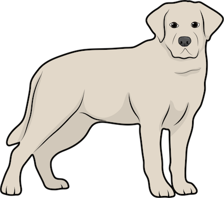 Side view drawing of a yellow Labrador Retriever dog standing