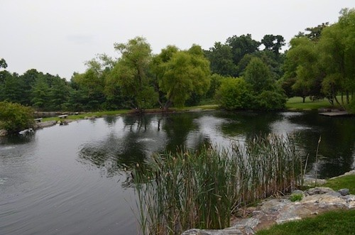 A pretty pond with green trees, large rocks and benches surrounding it