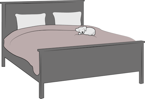 A large human bed with a small white dog sleeping on the right side