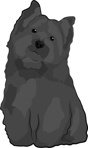 A little black and gray scruffy dog with small prick ears, a little black nose and dark eyes sitting down with his head tilted to the right
