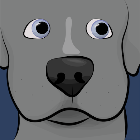 Close up of a gray dog with a large black nose and blue eyes