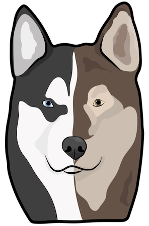 A drawing of a half husky and half wolf face