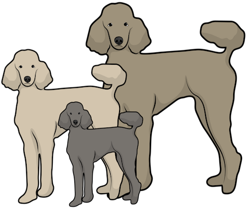 A drawing of three different size poodle dogs standing next to one another