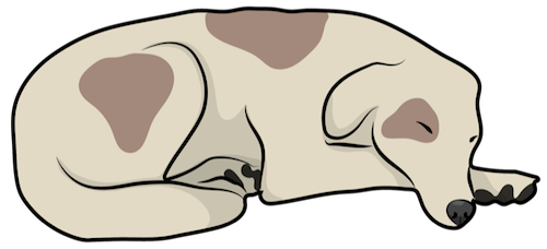 A tan dog with brown patches sleeping curled up on the floor