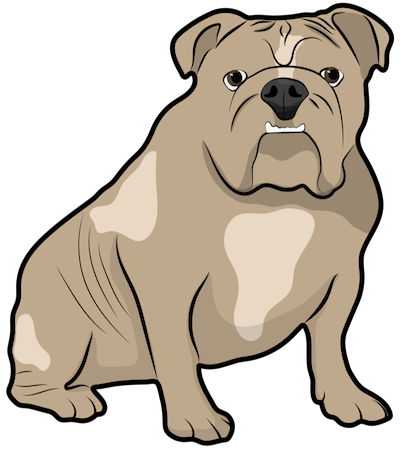 A tan and cream colored bulldog with a big head and wrinkles sitting down