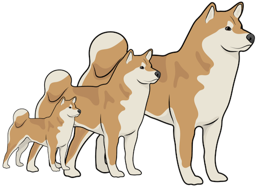 Three Shiba Inu dogs lined up from smallest to largest