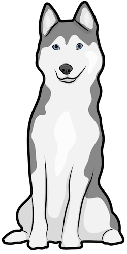 A gray and white Siberian Husky with blue eyes sitting down