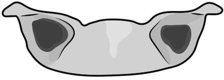 A drawing of the top of a gray dog's head with rose ears on each side