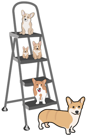 Five Corgi dogs on various steps of a ladder