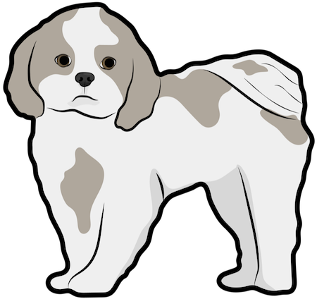 A little white and tan dog with ears that hang to the sides and a tail that curls up over her back standing