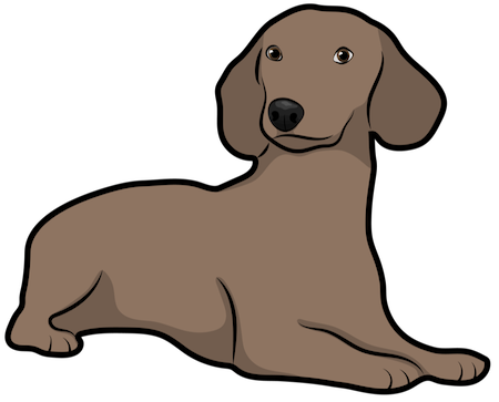 A brown long bodied, short legged brown dog with long ears that hang to the sides laying down