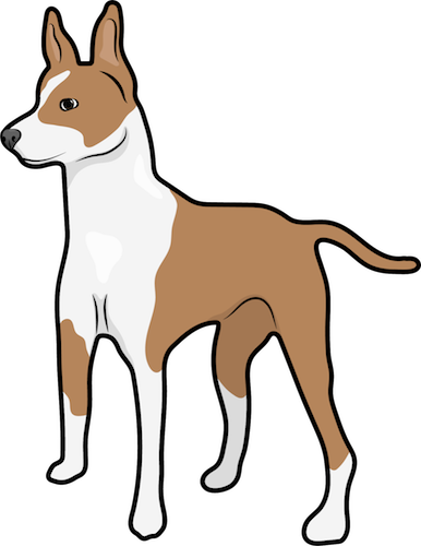 A brown and white dog with large prick ears and a long brown tail standing up