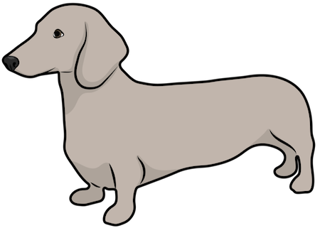 A tan dog with a very long body, short legs and long ears standing