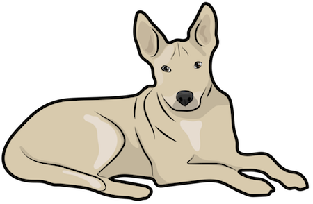 A tan dog with a short coat and large prick ears laying down