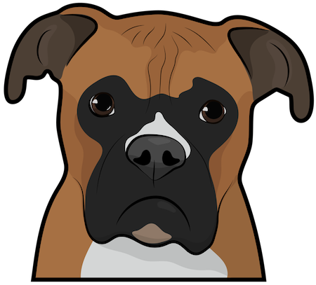 Close up head shot of a brown, white and black boxer dog with ears that hang to the sides, a pushed back snout and dark eyes