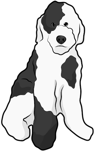A thick coated black and white dog sitting down