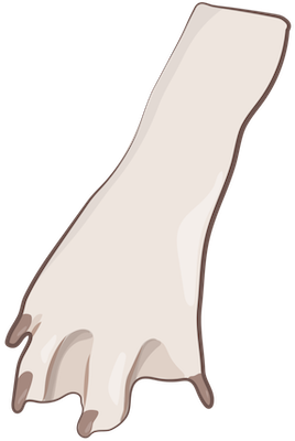 A drawing of a tan dog paw with webbed feet
