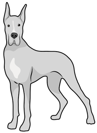 A large breed, gray and white dog with long legs and large prick ears standing
