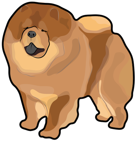 A big fluffy brown and tan dog with a black tongue and massive fluffy hair with a curl tail standing and facing the left