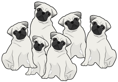 Six Pug dogs with black faces and tan bodies all sitting down in a group