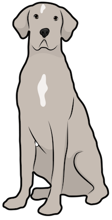 A tall tan dog with a white spot on her chest and long fold over ears that hang to the sides sitting down