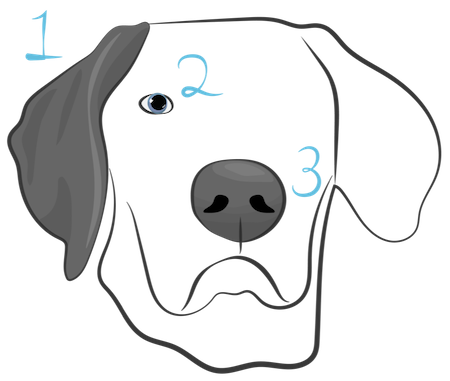 The face of a dog with a gray ear and gray nose with a 1 next to the ear, a 2 next to the eye and a 3 next to the nose