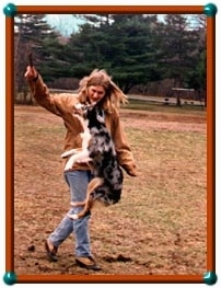 Katch22 the Miniature Australian Shepherd is jumping up to grab a stick out of a lady's hand in a field.