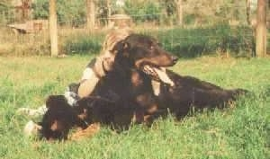 Fiona de Ker Gal the Beauceron laying in the grass with her litter of puppies and a little human girl leaning on her back