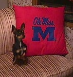 Sadie the Chihuahua is sitting in front of a red and blue Ole Miss pillow