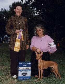 A Cirneco Dell'Etna dog is being posed by a lady who is behind it with another ladyholding a yellow and purple ribbon at a dog show