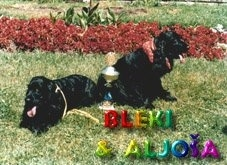 Bleki and Aljoia the black English Cocker Spaniels are laying and sitting next to each other in a field. There is a trophy between the both of them. The Words - BLEKI & ALJOIA - are overlayed and rainbow colors