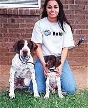 German Shorthaired Pointer Puppy Dogs