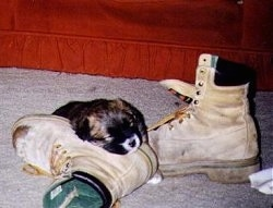 A black with tan puppy is sleeping on a fallen boot with the other boot next to it. There is a red couch in the background