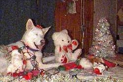 A pure white Siberian Husky is laying across a rug, its mouth is open, its eyes are closed and its tongue is sticking out. The Husky has a red ribbon on its head, there is a gold garland around it and there are wires on its side. There is a white teddy bear across from it.