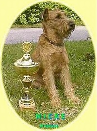 An Irish Terrier puppy is sitting in grass next to a trophy