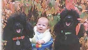 Two black Miniature Poodle dogs are sitting outside in front of a colorful tree with a baby in-between them. The dogs mouths are open and tongues are out. It looks like they are smiling.