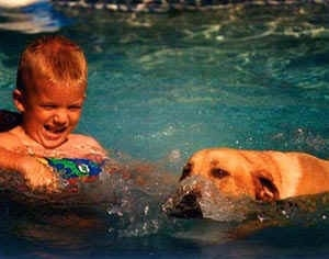 A boy is kicking the blue waters of a swimming pool and swimming next to him is a yellow Labrador Retriever dog.