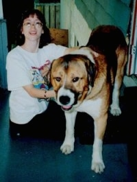A lady is kneeling next to a brown and black with white Spanish Mastiff dog with arms around it.